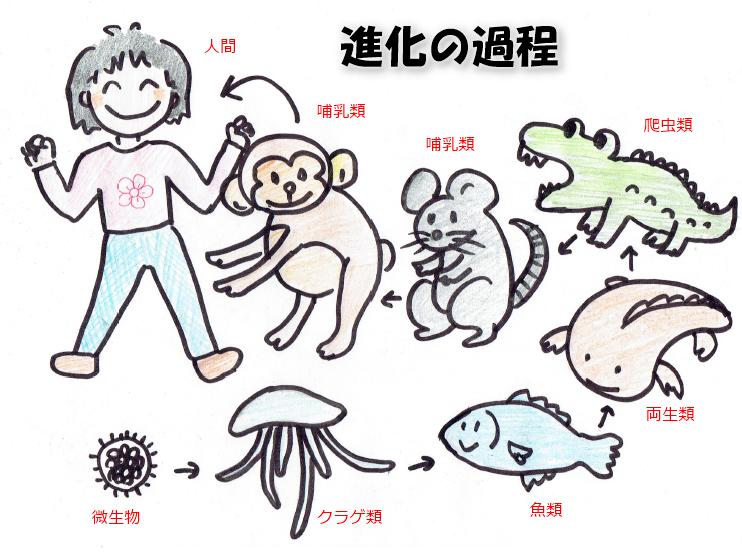 進化の過程2