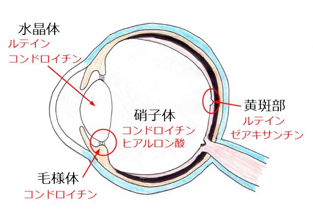 目の栄養構成成分