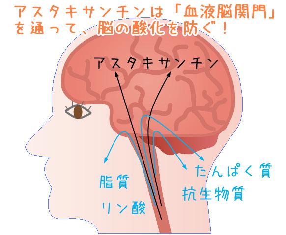 アスタキサンチン脳関門