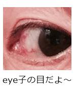 eye子の目