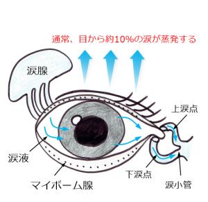 マイボーム腺涙の蒸発