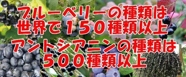 ブルーベリーの種類とアントシアニンの種類②