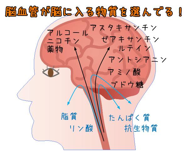 脳に入る物質